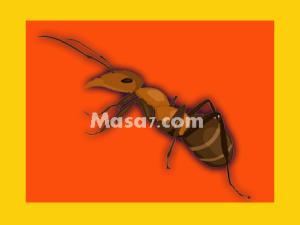 شركة مكافحة النمل الابيض في مكة