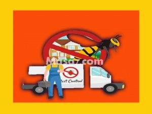 شركات رش حشرات بجدة