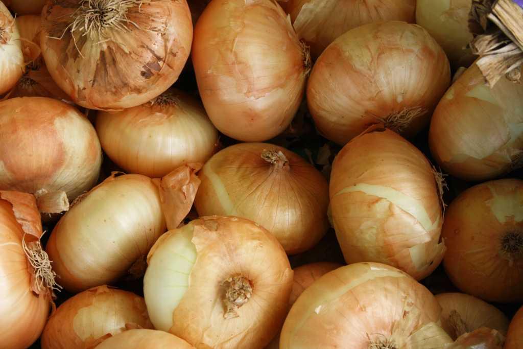 Recetas con cebolla