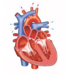 treatment of heart blockage masala tv unlabelled diagram of the heart gcse human heart diagram unlabeled [ 942 x 942 Pixel ]