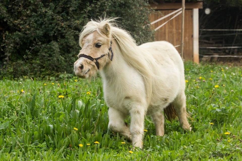 Nouveaux poneys au Mas Ballot  Gte du mas Ballot