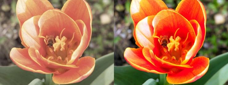 Foto raw prima e dopo la post produzione