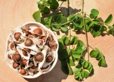 Moringa Beneficios y Sus Propiedades Curativas