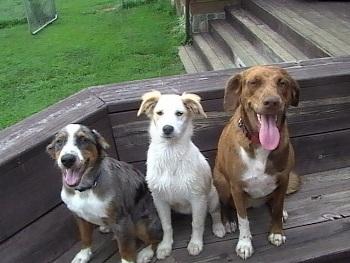 La Obligación de Cuidar un Perro