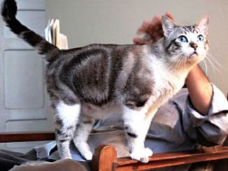 Los orígenes del gato doméstico