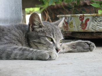 Cuando Envejece Nuestro Gato