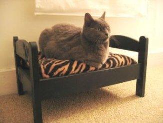 Diferentes Accesorios para Gatos