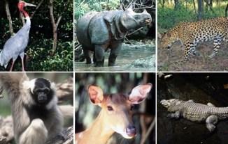Cuales son las Especies en Peligro De Extinción