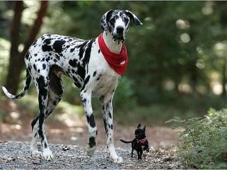 Etapas de Crecimiento del Perro Retraso y Trastornos