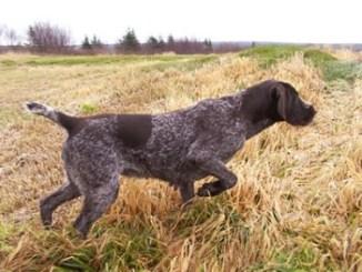 Fotos de perros de caza