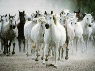 Los caballos salvajes en Europa y Asia