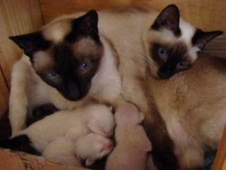 Como Alimentar Gatitos Recién Nacidos
