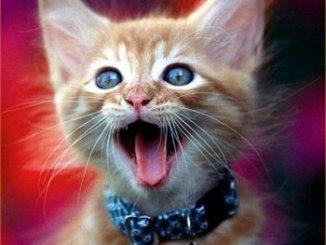 Como es la Boca y las Orejas del Gato
