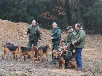 foto de perros sabuesos de restreo