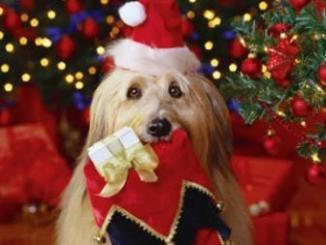 Qué Mascota Regalar en Navidad
