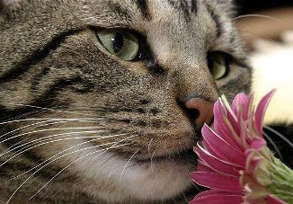 Funciona el tratamiento con Flores de Bach en Gatos