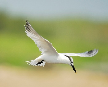 9 de Mayo Día Internacional de las Aves