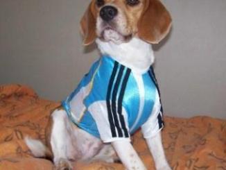 2 de Junio Día del Perro en Argentina