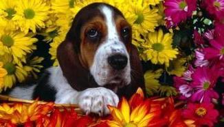 La Floriterapia Animal Esencias Florales para Mascotas