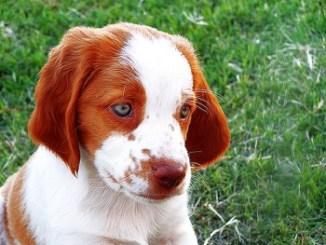Los cachorros nacen con los ojos cerrados y los abren entre los 8 a 14 día