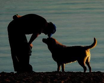 Las Mascotas Mejores Amigos del Hombre