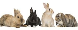 Variedad de Conejos Domésticos en Chile