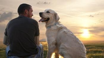 Consejos para el Cuidado de tu Perro