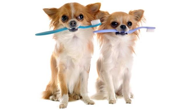 Cómo eliminar el sarro de los dientes de tu mascota