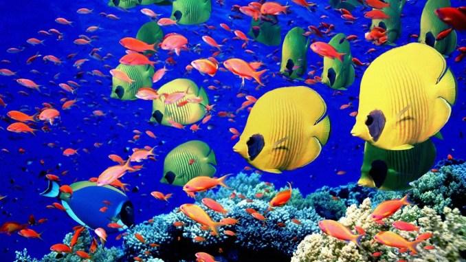 peces en peceras