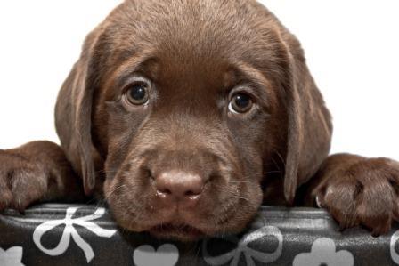 Foto de Los Derechos de nuestras Mascotas
