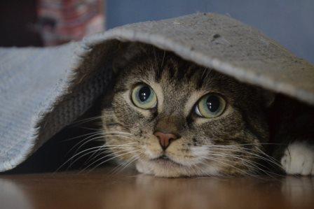 Foto de Los gatos nos entienden