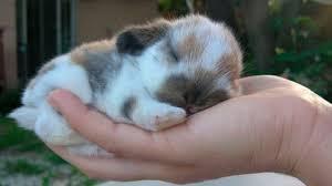 Foto de cuidados básicos a los que debe someterse un conejo