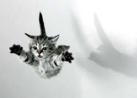 Por qué los gatos siempre caen parados
