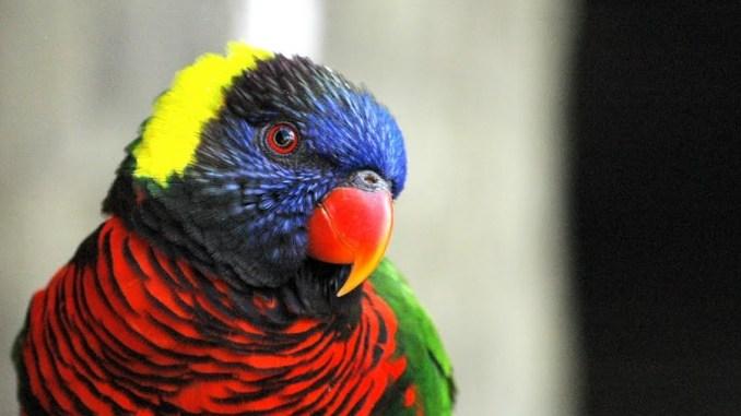 Las aves más exóticas