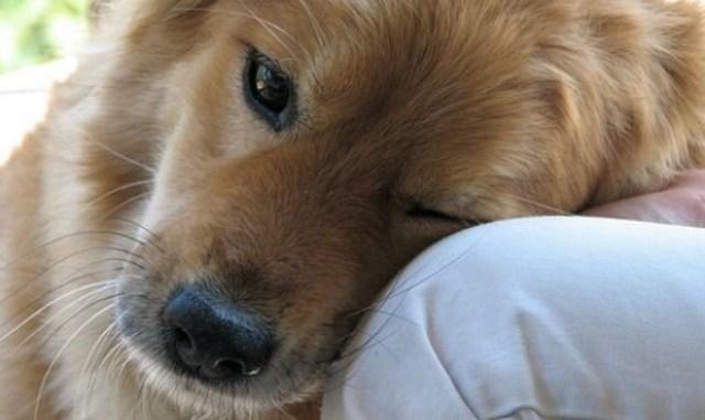 Tu perro sufre estreñimiento