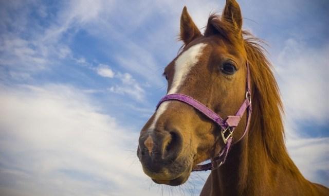 Las enfermedades más comunes que pueden afectar la salud del caballo