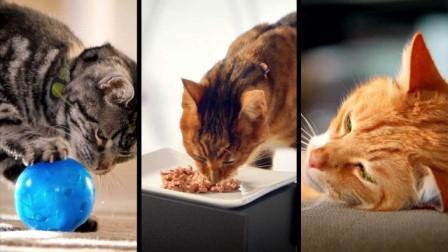 Conocimientos acerca del metabolismo del gato