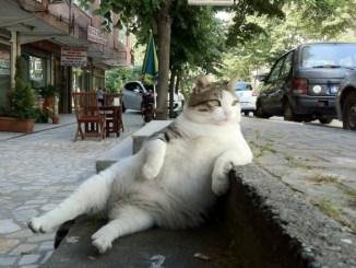 Cómo encuentran los gatos el camino de regreso