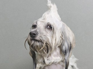 Hilarantes fotos de cachorros mojados