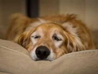 Consejos para perros con Problemas Intestinales