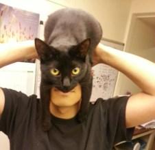 gato casco 01
