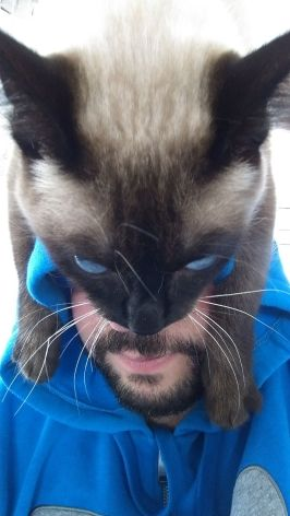 gato casco 03