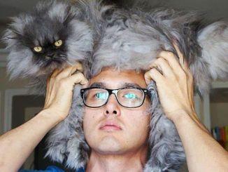 La curiosa moda de ponerse al gato de sombrero
