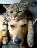 gato tierno 02