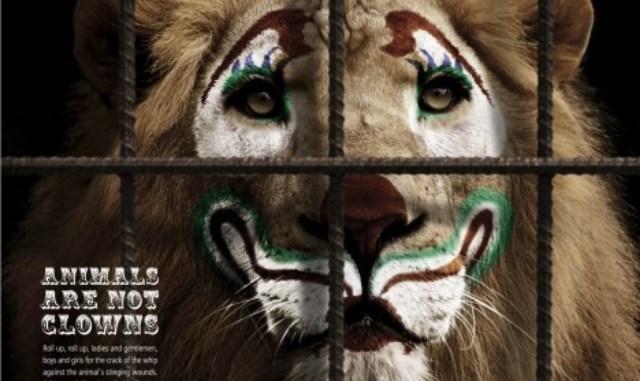 Los Circos y el maltrato Animal
