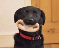 25 perros adorables que te sacarán una gran sonrisa