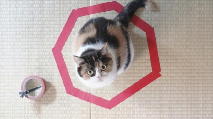 El mejor juego psicológico para atrapar a un gato
