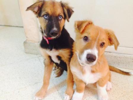 28 de mayo dia del perro sin raza