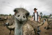 fotos selfies animales