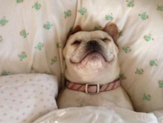 fotos de perros tiernos